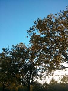 秋晴れのビルドアップラン