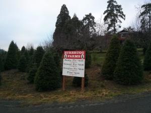 クリスマスツリーを自分で選んで切ります