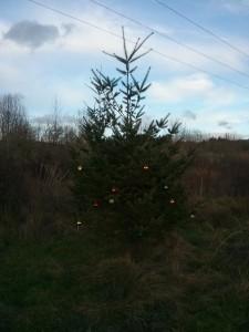毎年この木に誰かが飾り付けしてくれるんです