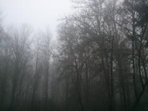 雑木林にかかった霧
