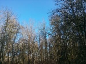 うちの裏の林