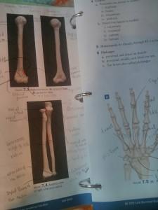 骨の勉強ばかりしていて、近所の塀のブロックまで大腿骨の下の部分に見えてきてます