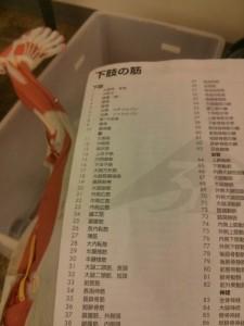 図書館の筋肉お兄さんに付いてくる筋肉名称リスト。嬉しいです。