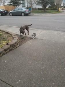 モカ「これからお散歩行くの。一緒に行く?」