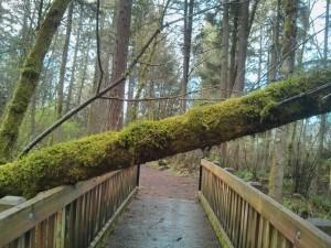 強風の後のトレラン。木が倒れててビックリ!