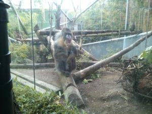 虚ろな目をして一点を見つめる猿