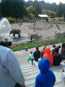 象さん用のもっと深い大きい池があるんです!